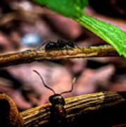 Ants Adventure Poster
