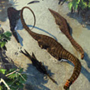 Apatosaurus From Above Poster