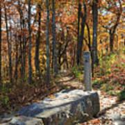 Appalachian Trail In Shenandoah National Park Poster