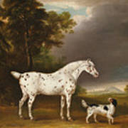 Appaloosa Horse And Spaniel Poster