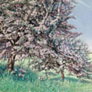 Apple Blossom Poster