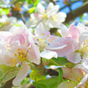 Apple Blossoms Art Prints Spring Trees Baslee Troutman Poster