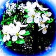 Apple Blossoms In Blue White Mist Poster