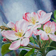 Apple Blossoms With Honeybee Poster