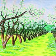 Apple Garden In Blossom Poster