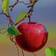 Apple On A Tree Poster