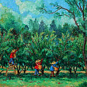 Apple Pickers  Littletree Orchard  Ithaca Ny Poster