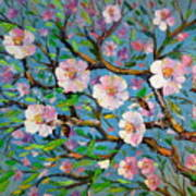 Apple Tree Blossom Poster