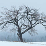 Apple Tree In Winter Fog Poster