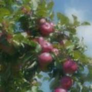 Apples And Sky Poster