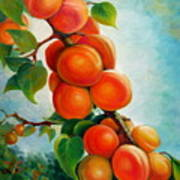 Apricots In The Garden Poster