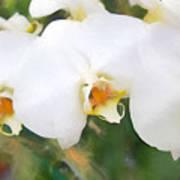 Aqua Lilies Poster