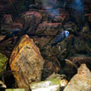 Aquarium Stones Arrangement Poster