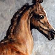 Arabian Foal Poster