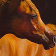 Arabian Horse Oil Painting Poster