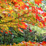 Arboretum Autumn Leaves Poster