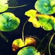 Arboretum Morning Poster