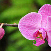 Arboretum Tropical House Orchid Poster