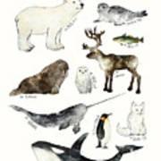 Arctic And Antarctic Animals Poster