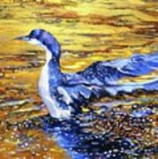 Arctic Loon On Golden Pond Poster