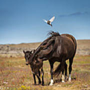 Arctic Tern Attacking Mare Poster