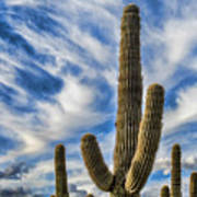 Arizona Saguaro  Poster