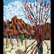 Arizona Trees In Blossom Poster