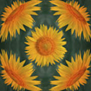 Around The Sunflower Poster