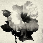 Art Is The Hibiscus -black And White Poster