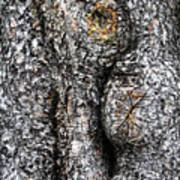 Art Within A Tree Poster