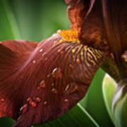 Artistic Iris Poster