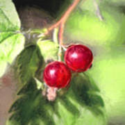 Artistic Panterly Two Wild Goosberries Poster