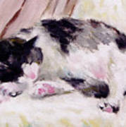 Artist's Cat Sleeping Poster