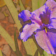 Artsy Iris Poster