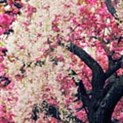 Asian Cherry Vignette Poster