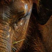 Asian Elephant Closeup Portrait Poster