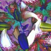 Asiatic Lilies Abstraction  Poster