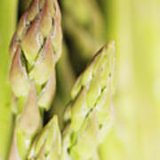 Asparagus Spears Macro Poster