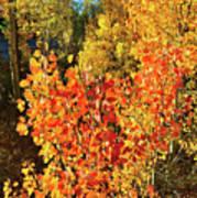 Aspen Colors In Dillon Colorado Poster