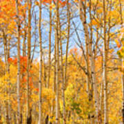 Aspen Fall Foliage Vertical Image Poster