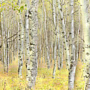 Aspen Forest 2 - Photo Painting Poster
