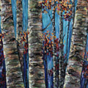 Aspen Forest In The Rocky Mountain Poster
