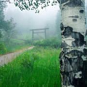 Aspen Gate Mist Poster