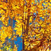 Aspen Glow Autumn Sky Poster