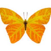Aspen Leaf Butterfly 3 Poster
