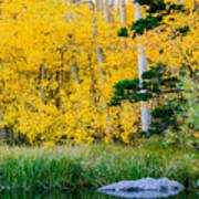 Aspen Pond Poster