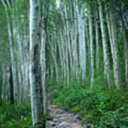 Aspen Trails  Poster