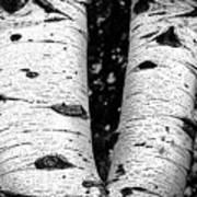 Aspen Tree Art Poster
