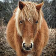 Assateague Island Horse Miekes Noelani Poster