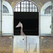 Asymmetrical Giraffe  Poster